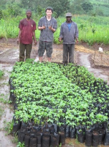 Ryan, Dennis, and Neveson check out 1000 papaya trees ready for planting.